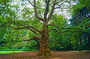 樹木のイメージの写真素材 [FYI01246902]