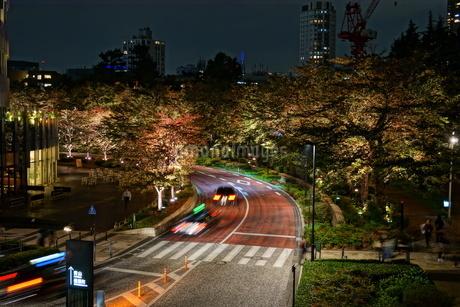 東京ミッドタウン裏の道の写真素材 [FYI01246908]