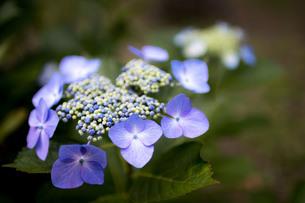 花1の写真素材 [FYI01247020]