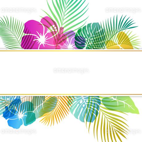 夏のトロピカルイメージ 背景素材のイラスト素材 [FYI01247083]