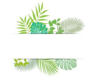熱帯植物の葉 背景素材のイラスト素材 [FYI01247090]