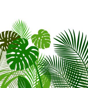 熱帯植物の葉 背景素材のイラスト素材 [FYI01247091]