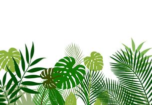 熱帯植物の葉 背景素材のイラスト素材 [FYI01247093]