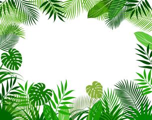 熱帯植物の葉 背景素材のイラスト素材 [FYI01247094]