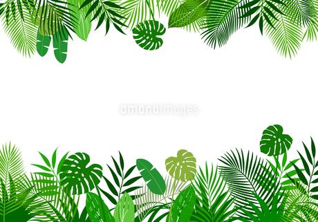 熱帯植物の葉 背景素材のイラスト素材 [FYI01247096]