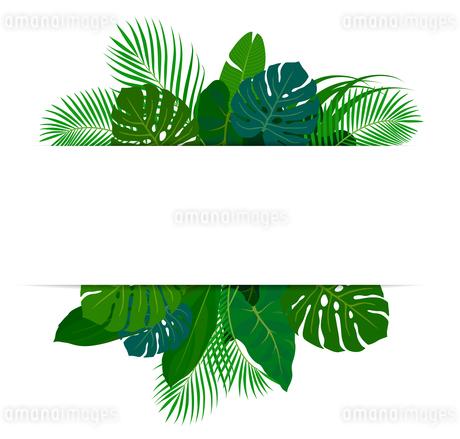熱帯植物の葉 フレーム素材のイラスト素材 [FYI01247097]