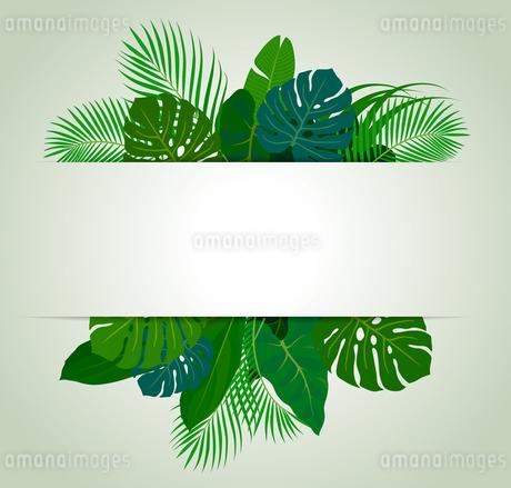 熱帯植物の葉 フレーム素材のイラスト素材 [FYI01247099]
