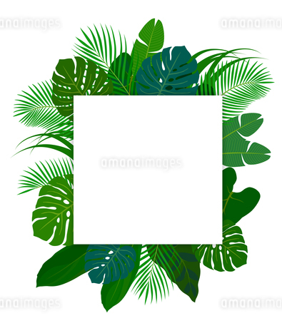 熱帯植物の葉 フレーム素材のイラスト素材 [FYI01247100]