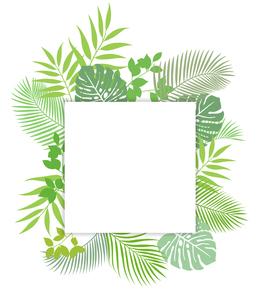 熱帯植物の葉 フレーム素材のイラスト素材 [FYI01247102]