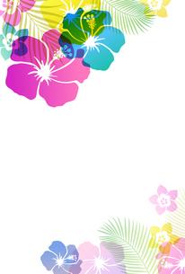 夏のトロピカルイメージ はがきテンプレートのイラスト素材 [FYI01247107]
