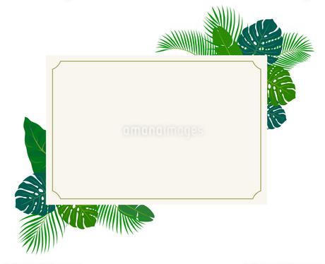 南国の植物とポストカードのイラスト素材 [FYI01247298]
