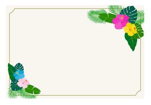 南国の花と植物 ハガキテンプレートのイラスト素材 [FYI01247309]
