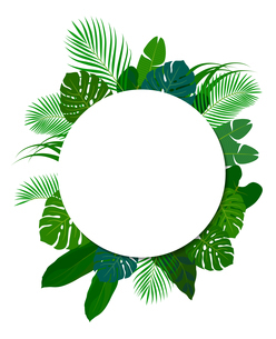 南国の植物 装飾フレームのイラスト素材 [FYI01247310]