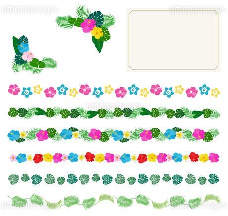 南国の花と植物 ハガキ フレームセットのイラスト素材 [FYI01247312]