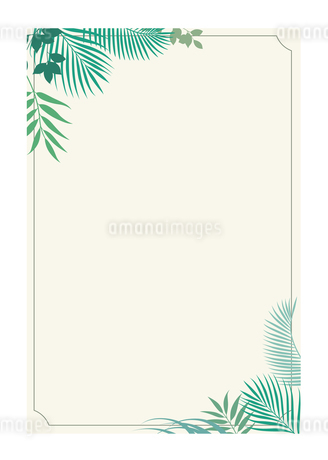 はがきテンプレート 熱帯植物のイラスト素材 [FYI01247644]