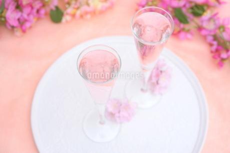 桜のシャンパンの写真素材 [FYI01247829]