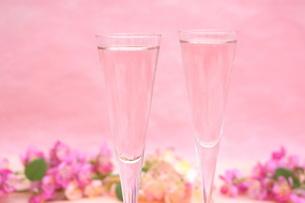 桜のシャンパンの写真素材 [FYI01247831]