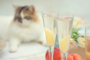 ピーチな炭酸・桃のシャンパンと猫の写真素材 [FYI01247850]