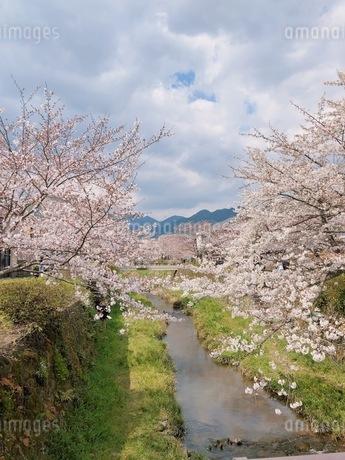 川と空と桜の写真素材 [FYI01248103]