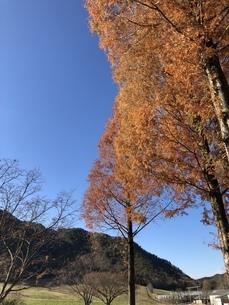 秋の山の写真素材 [FYI01248202]