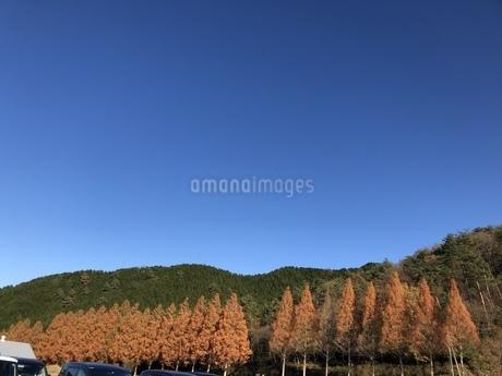 秋の並木の写真素材 [FYI01248214]