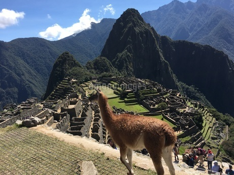 マチュピチュ Machu Picchuの写真素材 [FYI01248240]