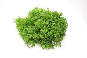 ワサビ菜の写真素材 [FYI01248303]