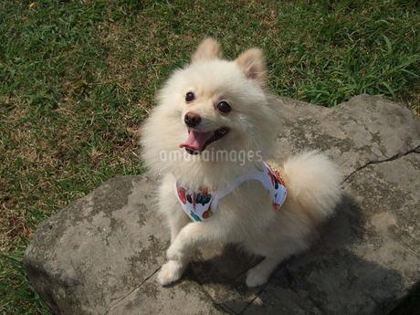犬の写真素材の写真素材 [FYI01248469]