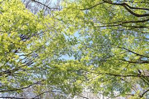新緑の写真素材 [FYI01248479]