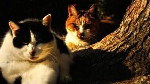 睨みの野良猫の写真素材 [FYI01248704]