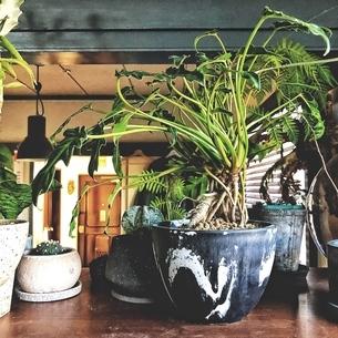 鉢植えの植物の写真素材 [FYI01248805]