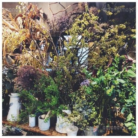 花屋の写真素材 [FYI01248811]
