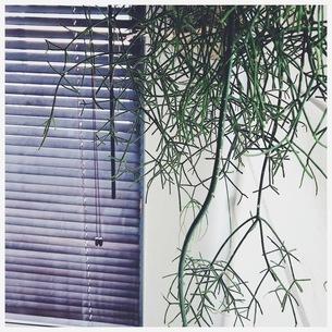 窓辺の植物の写真素材 [FYI01248817]