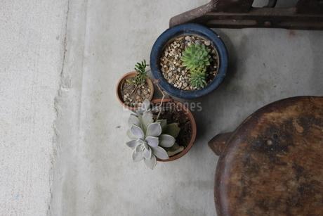 灰色と鉢植えの写真素材 [FYI01248841]