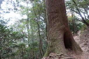 筑波山の木の写真素材 [FYI01248922]