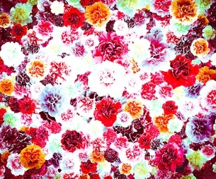 花の写真素材 [FYI01249085]