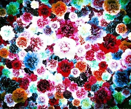 花の写真素材 [FYI01249087]