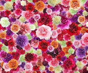 花の写真素材 [FYI01249090]