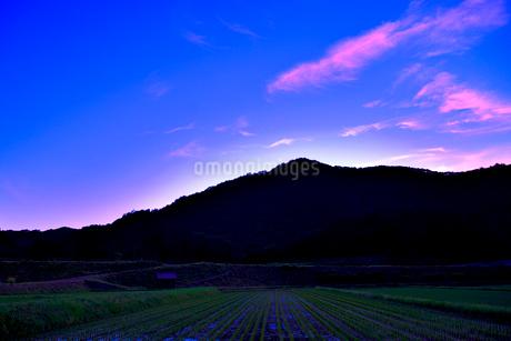 水田の夕景の写真素材 [FYI01249299]