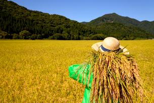 収穫の秋稲穂を見つめるシニアの写真素材 [FYI01249305]