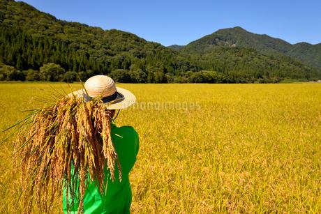 収穫の秋稲穂を見つめるシニアの写真素材 [FYI01249307]