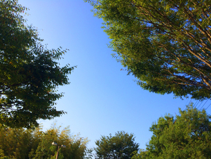 木と空の写真素材の写真素材 [FYI01249329]