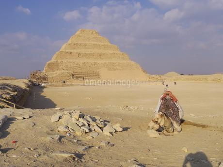 【エジプト】サッカラの階段ピラミッドの前に佇むラクダの写真素材 [FYI01249431]