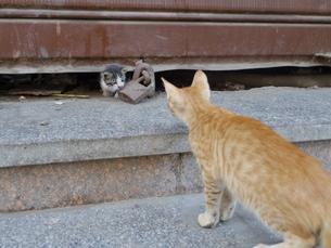 【エジプト】カイロの街角で挨拶する猫の赤ちゃんの写真素材 [FYI01249432]