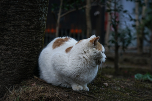 白猫のイメージの写真素材 [FYI01249484]