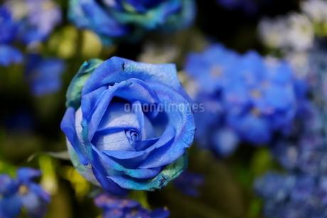 青いバラのフラワーアレンジメントの写真素材 [FYI01249561]
