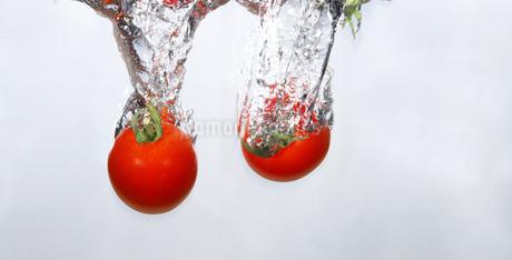 水中のミニトマトの写真素材 [FYI01249571]