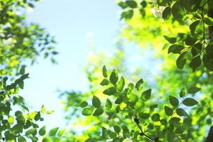 新緑と青空の写真素材 [FYI01249663]