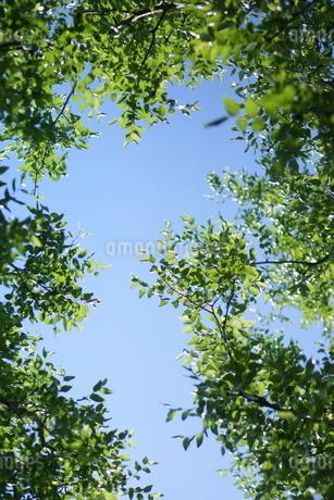 新緑と青空の写真素材 [FYI01249692]