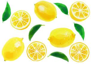 レモンのパターンのイラスト素材 [FYI01249716]